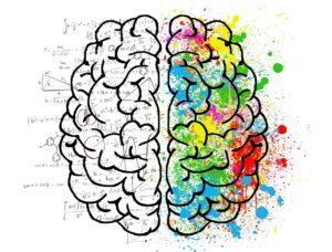 Transcreation brain